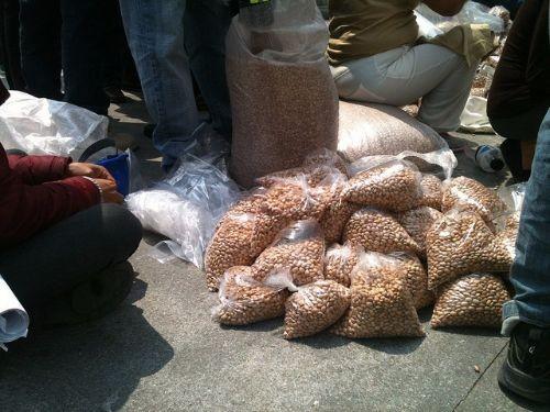 Activistas en la Avenida Reforma de Ciudad de México, ofrecen frijoles que provienen de semillas sin modificaciones genéticas (Foto: Emilio Godoy/IPS).