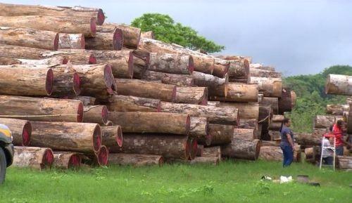 Tala ilegal en Darién realizada por grupos foráneos y locales.