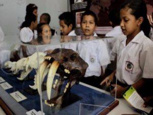 Estudiantes en el Museo de Ciencias Naturales. (Foto: David Mesa (La Prensa).