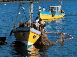 Extracción de pescado para la venta en los mercados.