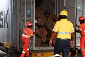 Decomiso de maderas taladas en forma ilegal.