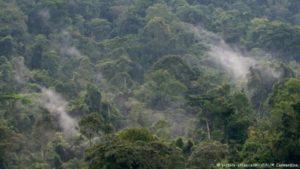 El virus fue aislado por primera vez en 1947 en el bosque de Zika, en Uganda (África oriental). Como en el caso del VIH, el virus del Zika fue detectado primero en monos.